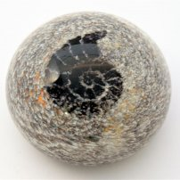 Siddy  Langley Ammonite Paperweight
